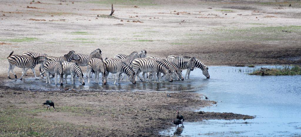 circuit safari au Botswana