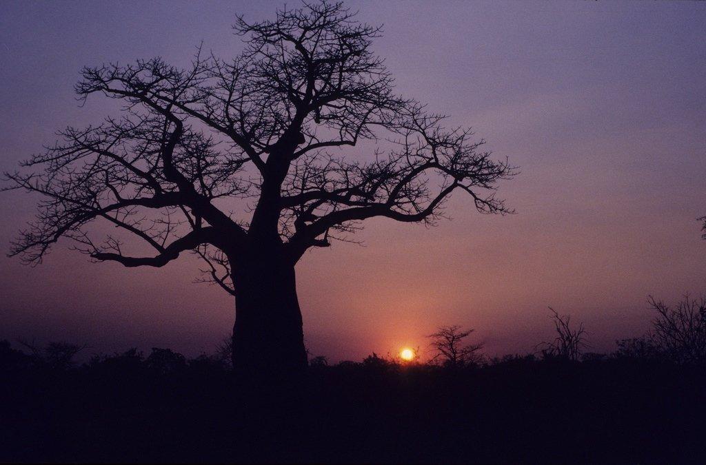 Climat Botswana
