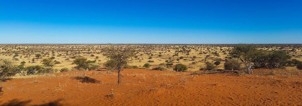 désert du Kalahari au Botswana