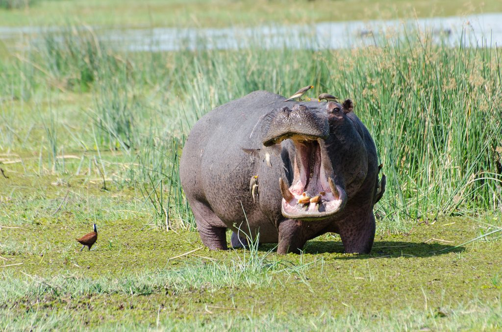 Moremi Botswana