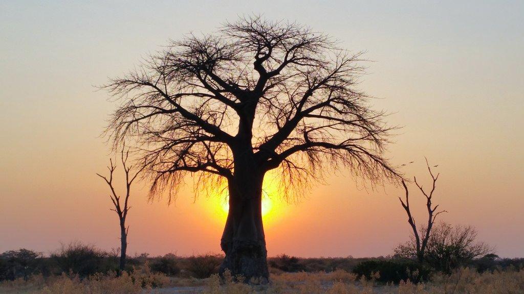 nature botswana