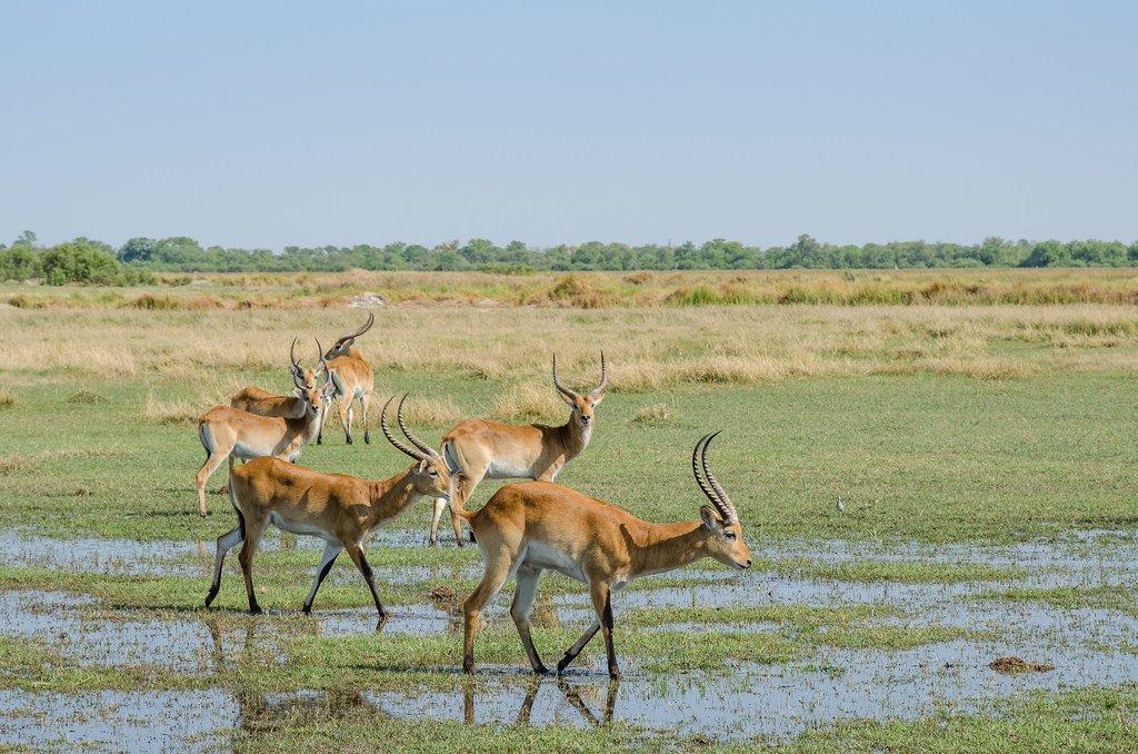 circuit au Botswana