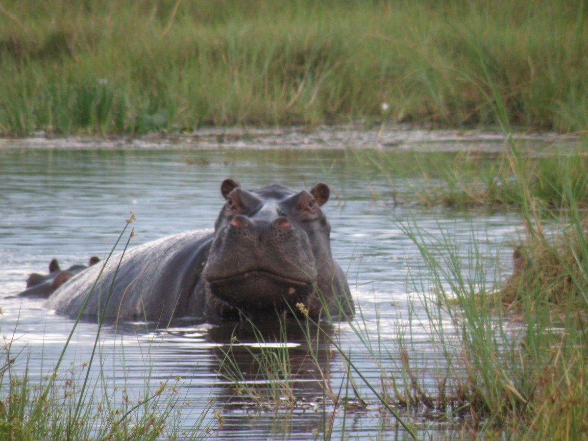 Delta de l'Okavango au Botswana