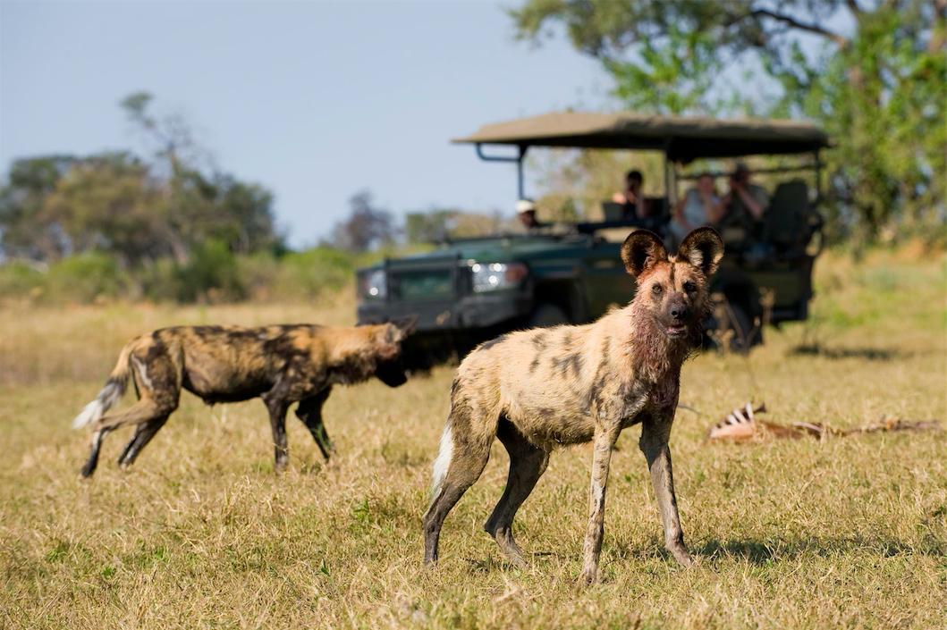 Safari à Zarafa