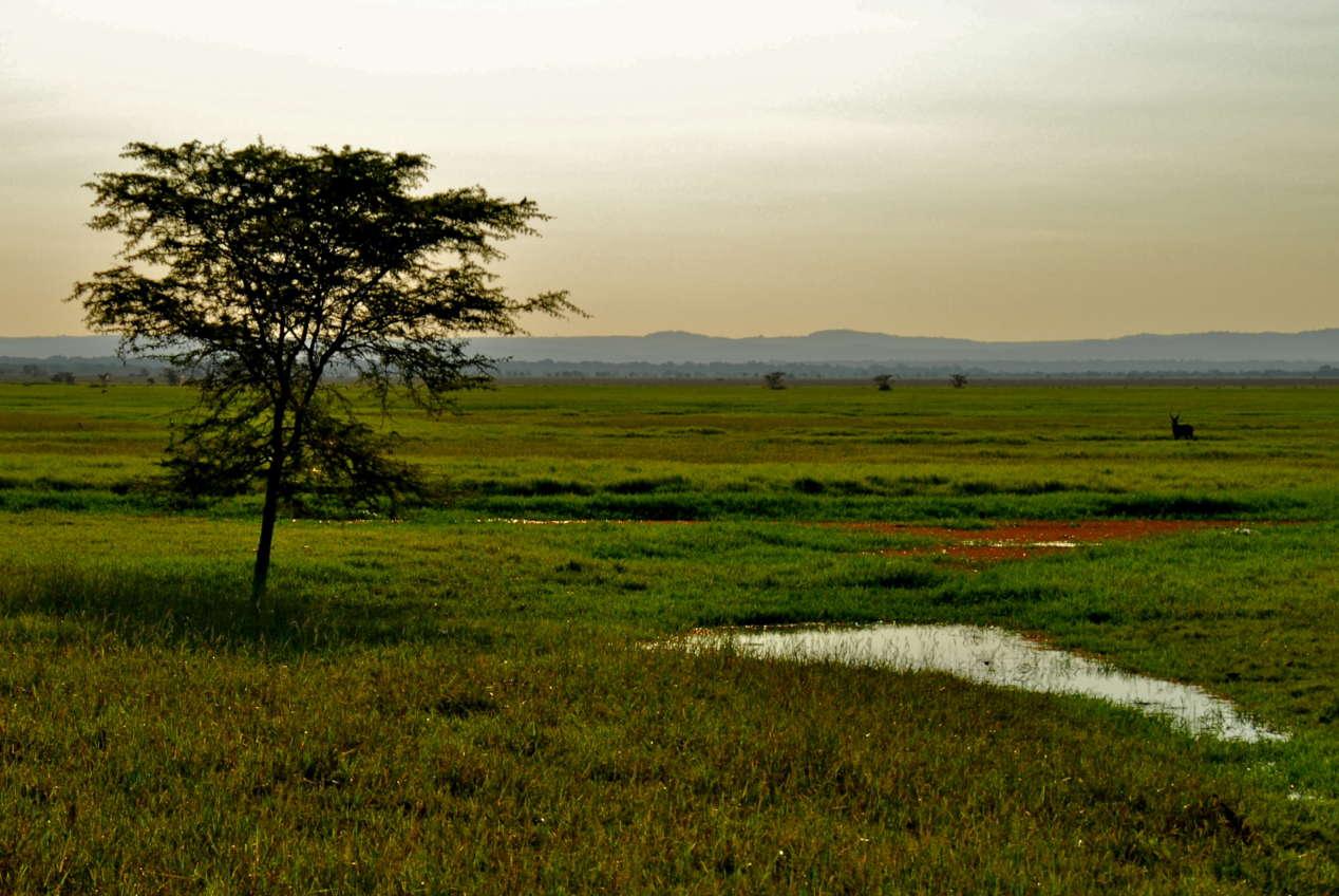 Gorongosa Mozambique