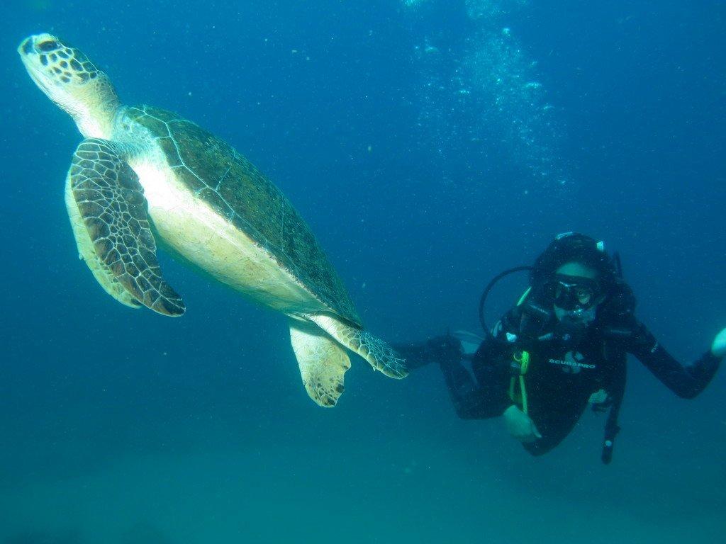 plongée au Mozambique