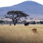 safari-mozambique