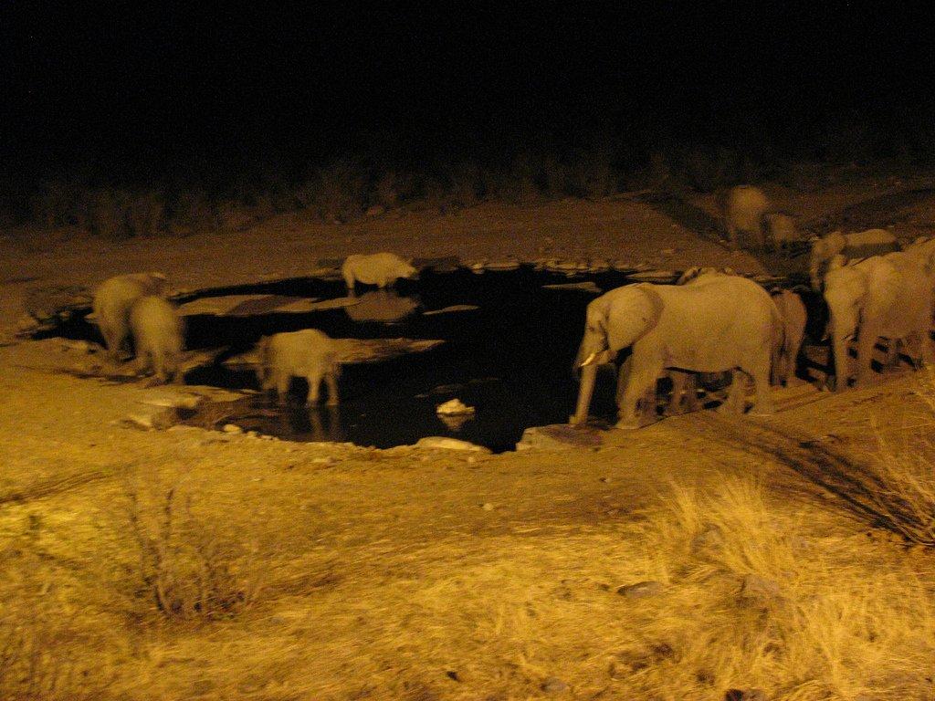 Etosha Namibie waterhole