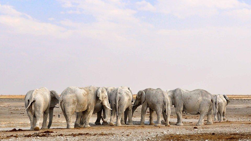 Etosha National Park Namibie