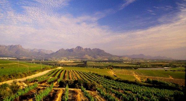 route des vins afrique du sud