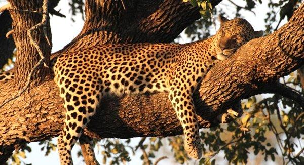 safaris et savane en afrique du sud