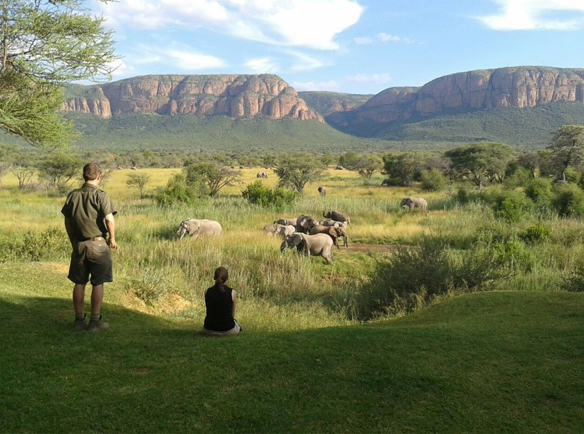safari-marataba