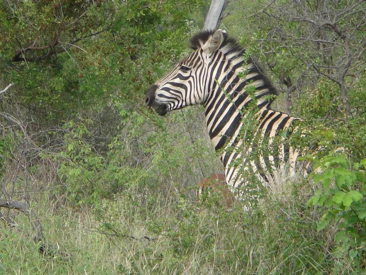 safari zuid afrika