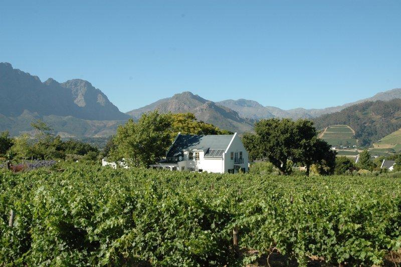 vignobles afrique du sud