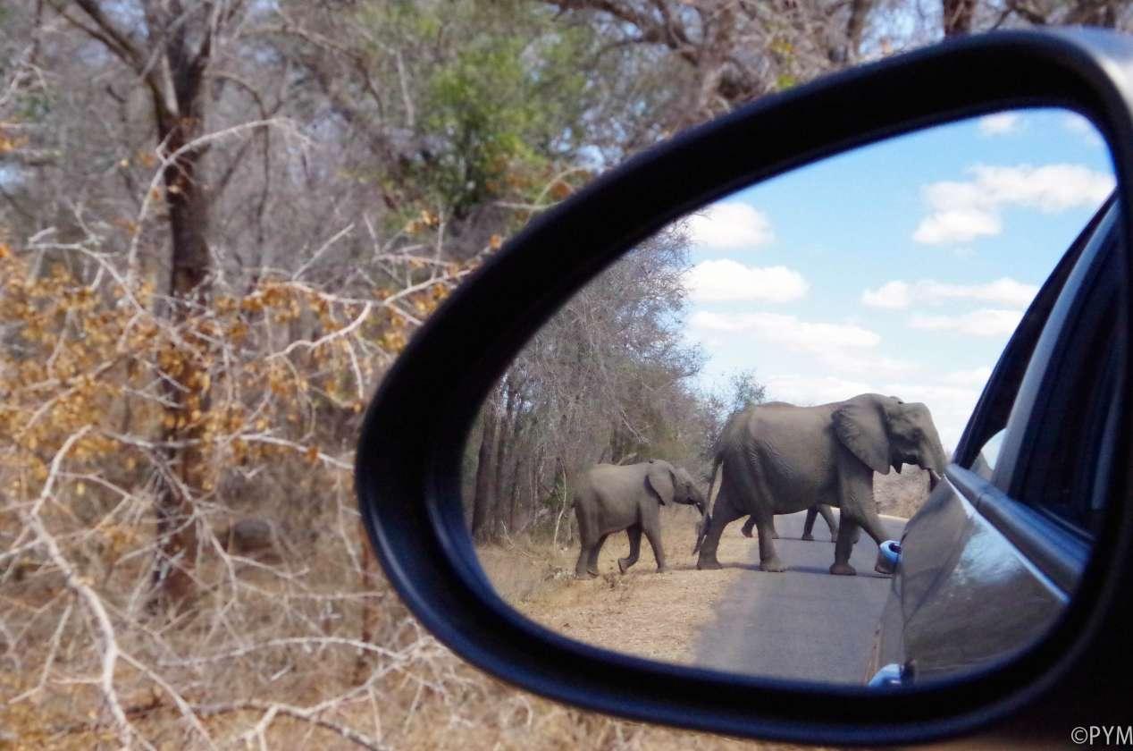safari kruger afrique du sud