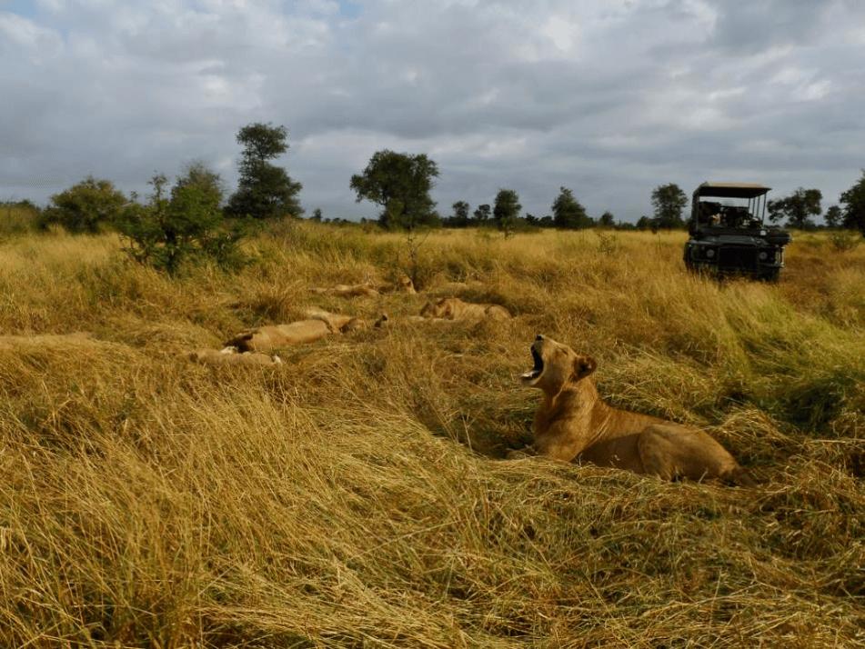 Singita Kruger