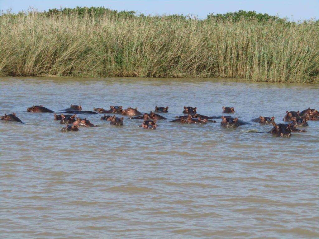 hippopotames Santa Lucia