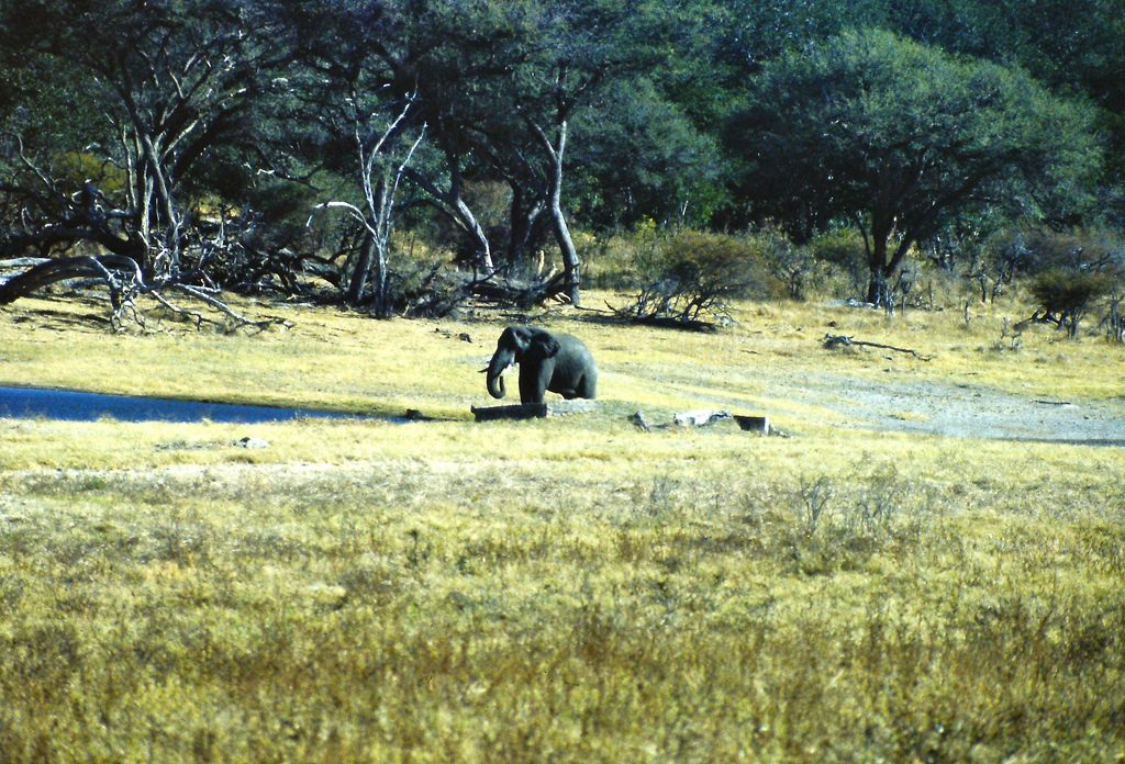 safari au Zimbabwe